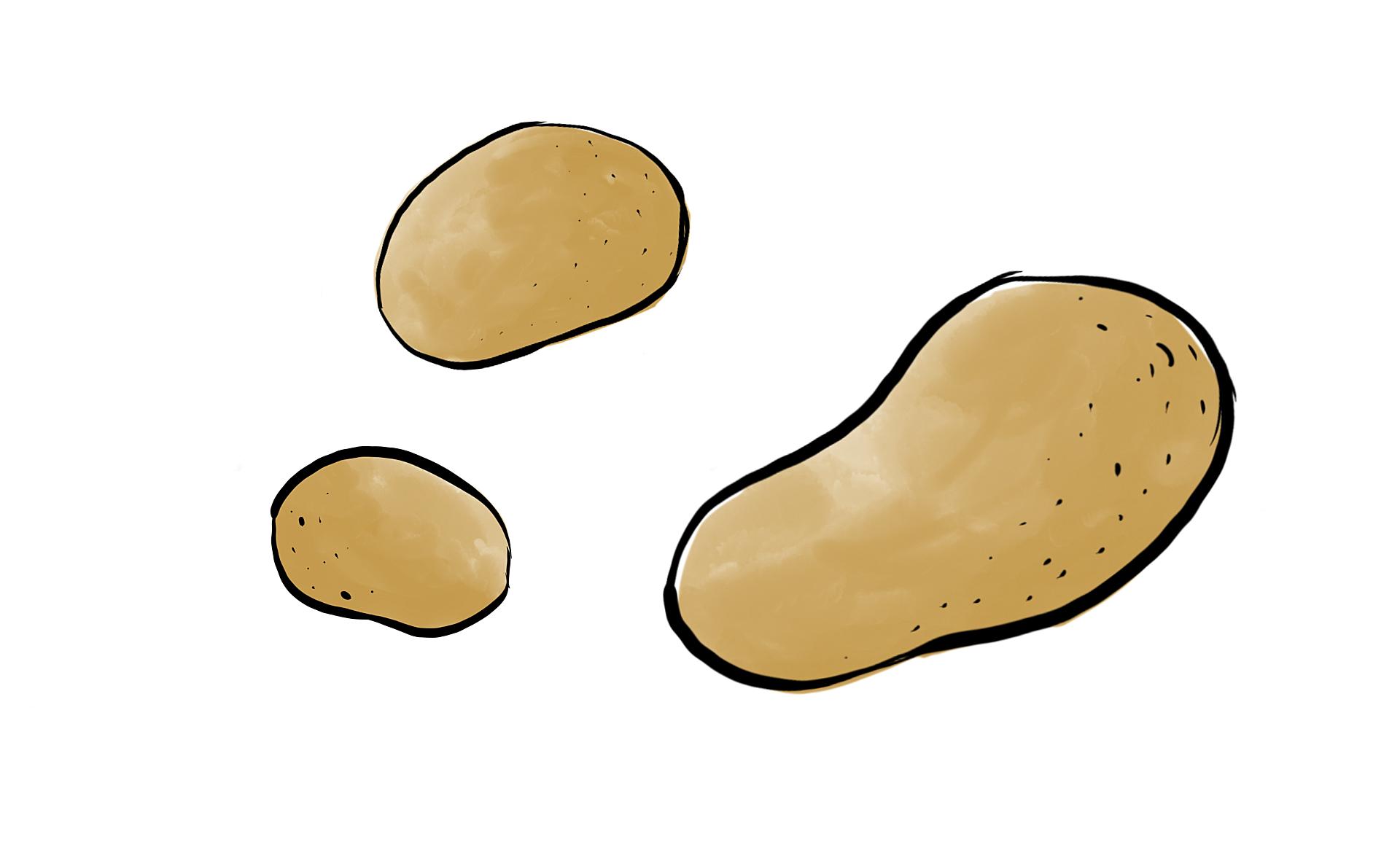 Werderhof_Goettingen_Produkte_Kartoffeln